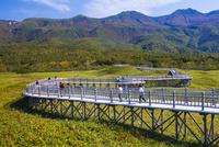 知床五湖の高架木道 25041036298| 写真素材・ストックフォト・画像・イラスト素材|アマナイメージズ