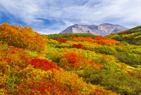 旭岳 25041036399| 写真素材・ストックフォト・画像・イラスト素材|アマナイメージズ
