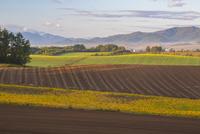 朝の新栄の丘からの展望 25041036406| 写真素材・ストックフォト・画像・イラスト素材|アマナイメージズ