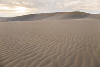 夕暮れの鳥取砂丘 25041036521| 写真素材・ストックフォト・画像・イラスト素材|アマナイメージズ