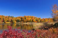 紅葉の八幡平の大沼