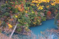 紅葉の寸又峡 25053018035| 写真素材・ストックフォト・画像・イラスト素材|アマナイメージズ