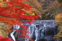 紅葉の袋田の滝 25053018073  写真素材・ストックフォト・画像・イラスト素材 アマナイメージズ