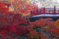 紅葉の弥彦公園