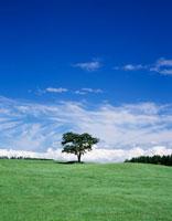 草原の一本の木