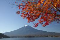 富士山とモミジの紅葉