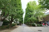 東京大学教養学部キャンパス
