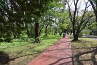 和光樹林公園のウォーキング・ランニングコース