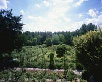 モネの家の庭