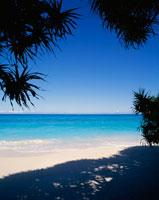 アダンの木陰と海
