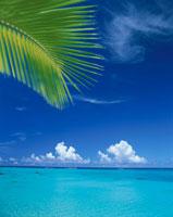 椰子の葉と海8月   沖縄県 25103002938| 写真素材・ストックフォト・画像・イラスト素材|アマナイメージズ
