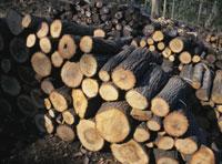 クヌギの木(炭焼き用) 25118000780| 写真素材・ストックフォト・画像・イラスト素材|アマナイメージズ