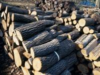 炭焼き用クヌギの木 25118000783| 写真素材・ストックフォト・画像・イラスト素材|アマナイメージズ