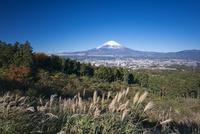 秋の乙女峠から御殿場市街と冠雪した富士山 25130019768| 写真素材・ストックフォト・画像・イラスト素材|アマナイメージズ