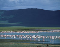 フラミンゴ ンゴロンゴロ国立公園