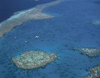 サンゴ礁 ハミルトン島近く 25158018111| 写真素材・ストックフォト・画像・イラスト素材|アマナイメージズ