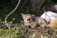 野良の子猫 25167015531| 写真素材・ストックフォト・画像・イラスト素材|アマナイメージズ