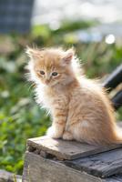 野良の子猫 25167015535| 写真素材・ストックフォト・画像・イラスト素材|アマナイメージズ