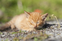 野良の子猫 25167015537  写真素材・ストックフォト・画像・イラスト素材 アマナイメージズ