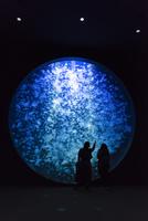 鶴岡市立加茂水族館 クラゲドリームシアター 25167015565| 写真素材・ストックフォト・画像・イラスト素材|アマナイメージズ