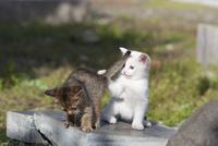 野良の子猫 25167015576| 写真素材・ストックフォト・画像・イラスト素材|アマナイメージズ