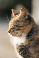 陽だまりの野良猫