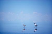 ウユニ塩湖とフラミンゴ