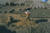 泥に草を混ぜる建材用のアドべづくり