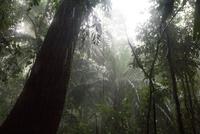 アマゾン地方の大雨の中の森 25196002534| 写真素材・ストックフォト・画像・イラスト素材|アマナイメージズ