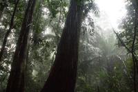 アマゾン地方の大雨の中の森 25196002535| 写真素材・ストックフォト・画像・イラスト素材|アマナイメージズ