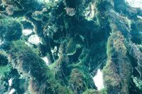 雲霧林帯の樹林と苔