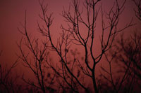 冬木と夕景