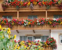 色とりどりの花の窓 25210005169| 写真素材・ストックフォト・画像・イラスト素材|アマナイメージズ