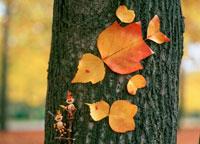 木工人形・落葉遊び 鳥 25210008432| 写真素材・ストックフォト・画像・イラスト素材|アマナイメージズ