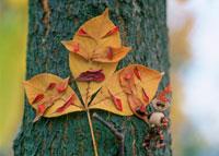 木工人形と落葉で作った顔 25210008434| 写真素材・ストックフォト・画像・イラスト素材|アマナイメージズ