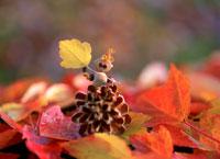 木工人形・色づく楓の葉をもつ 25210008438| 写真素材・ストックフォト・画像・イラスト素材|アマナイメージズ