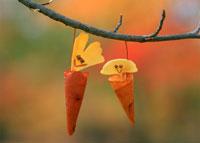 落葉遊び・みの虫 25210008441| 写真素材・ストックフォト・画像・イラスト素材|アマナイメージズ