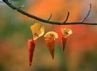 落葉遊び・みの虫 25210008442| 写真素材・ストックフォト・画像・イラスト素材|アマナイメージズ