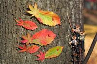 木工人形 落葉遊びをする親子 25210008590| 写真素材・ストックフォト・画像・イラスト素材|アマナイメージズ
