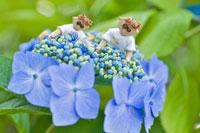 木工人形・ガクアジサイの花を観察する親子