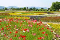 慶州歴史地域(月城地区) 瞻星台と花壇