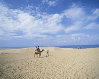 鳥取砂丘のラクダ乗り 25222004923  写真素材・ストックフォト・画像・イラスト素材 アマナイメージズ
