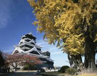 熊本城 25222004985  写真素材・ストックフォト・画像・イラスト素材 アマナイメージズ