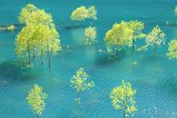 秋扇湖の新緑