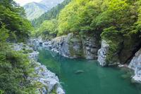 新緑の祖谷川 25222015165  写真素材・ストックフォト・画像・イラスト素材 アマナイメージズ