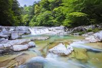 新緑の面河渓 25222015174  写真素材・ストックフォト・画像・イラスト素材 アマナイメージズ