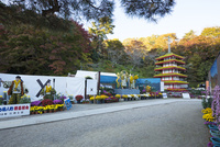二本松の菊人形展 25222015182  写真素材・ストックフォト・画像・イラスト素材 アマナイメージズ