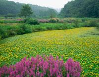 アサザ咲く池と公園 花之江の郷