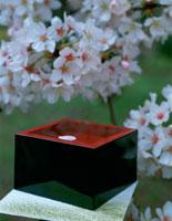 升酒と桜 25224001130| 写真素材・ストックフォト・画像・イラスト素材|アマナイメージズ