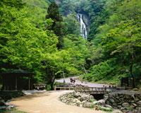 新緑の神庭の滝